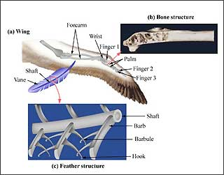 Diagram of smart joint design based on a bird's wing.