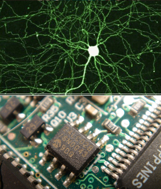 Imaging of neurons on top, photo of computer circuitry on bottom.