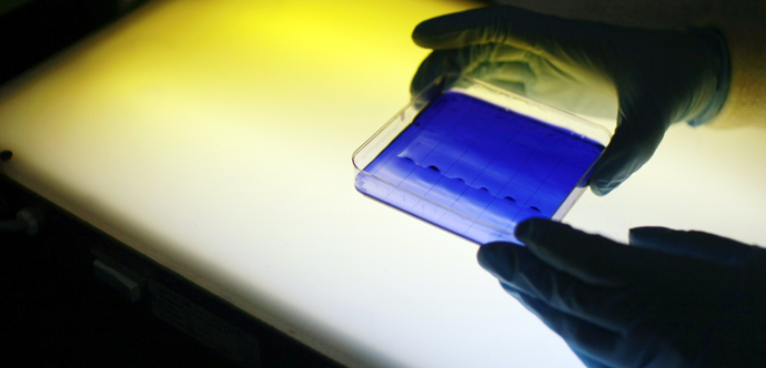 A photo of gloved hands holding a small square dish containing a blue substance lit from behind.